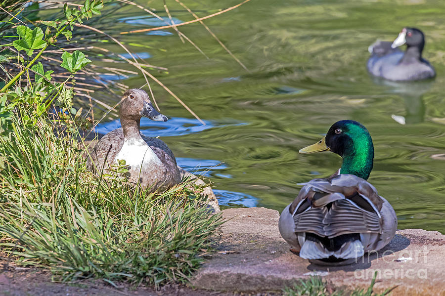 Birds Photograph - A Restful Moment by Kate Brown