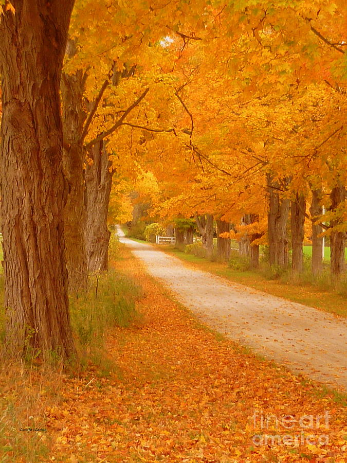 A Romantic Country Walk In The Fall Photograph
