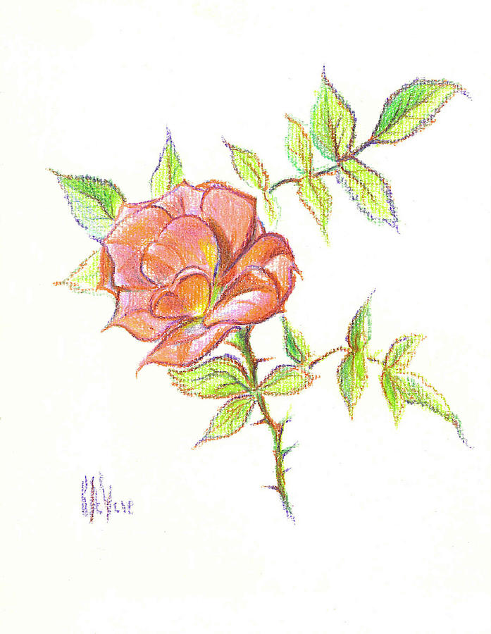 A Rose In Brigadoon Drawing  - A Rose In Brigadoon Fine Art Print