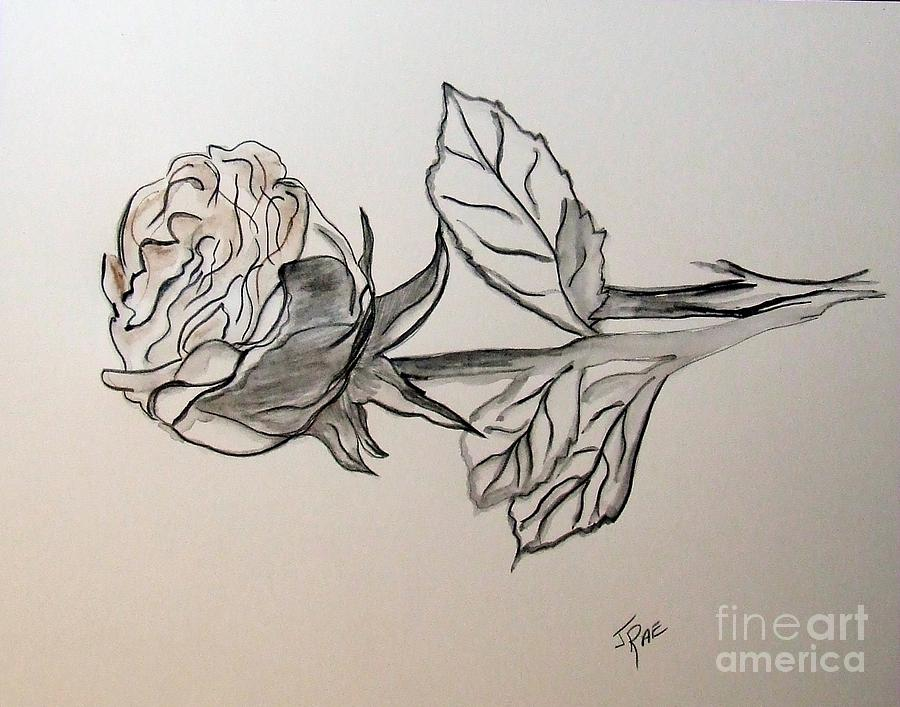 A Rose Is A Rose Drawing  - A Rose Is A Rose Fine Art Print