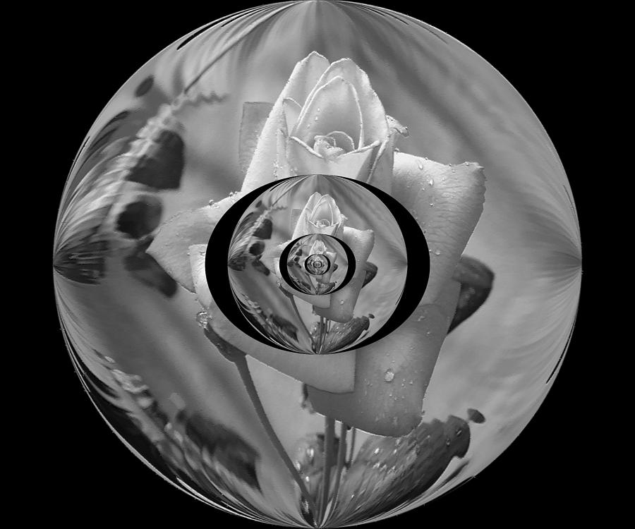 A Rose Within Photograph  - A Rose Within Fine Art Print