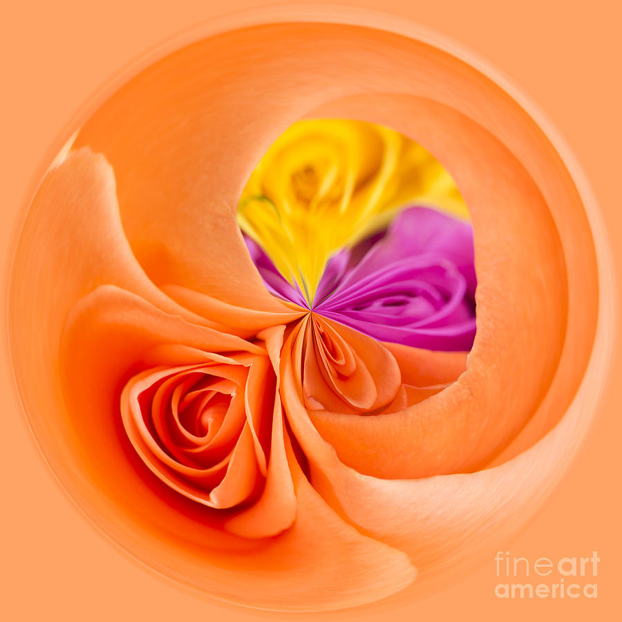 Art Photograph - A Round Of Roses by Anne Gilbert