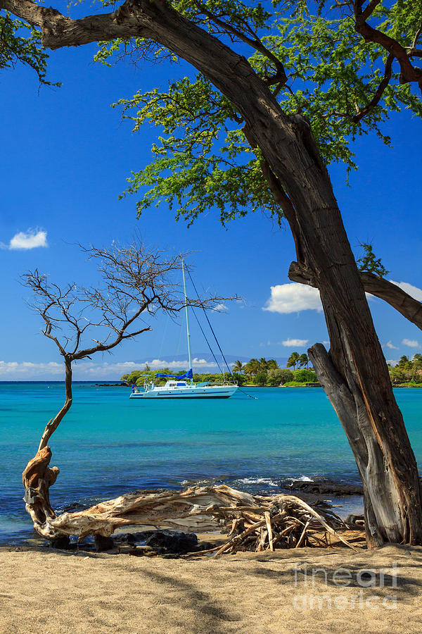 A Sailboat In Anaehoomalu Bay Photograph  - A Sailboat In Anaehoomalu Bay Fine Art Print