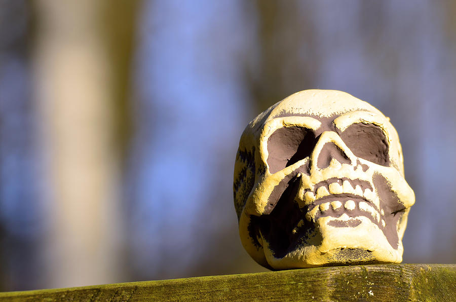 A Skull In Color Photograph