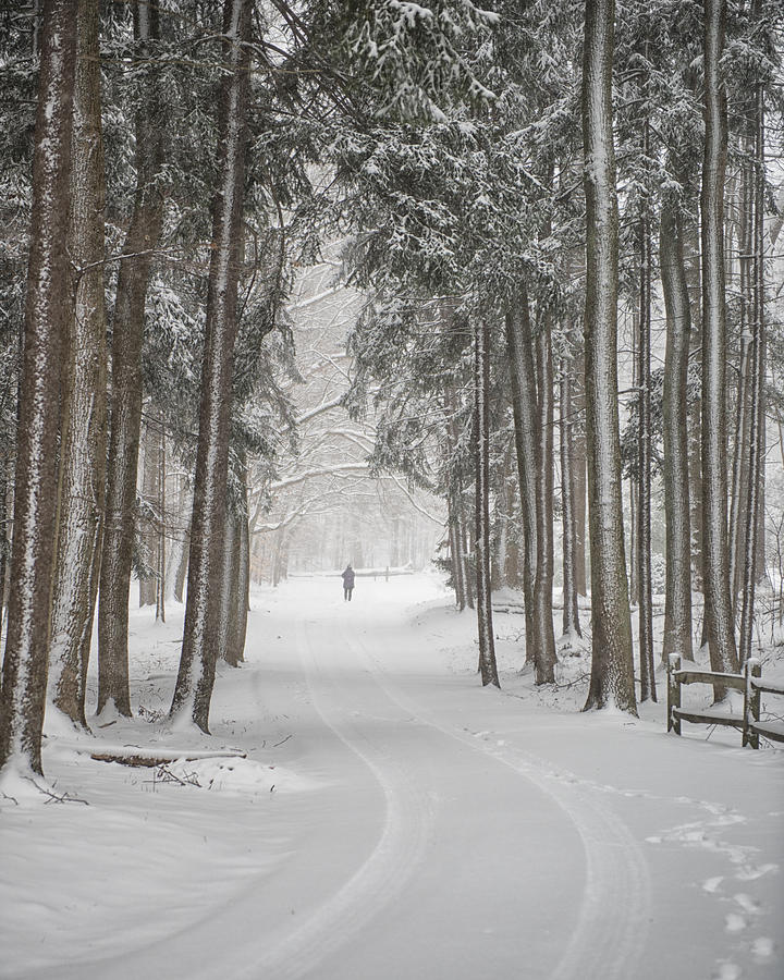 Winter Photograph - A Solitary Winter Wanderer by Dick Wood