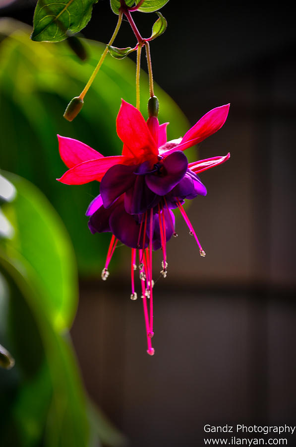 A Special Red Flower Photograph