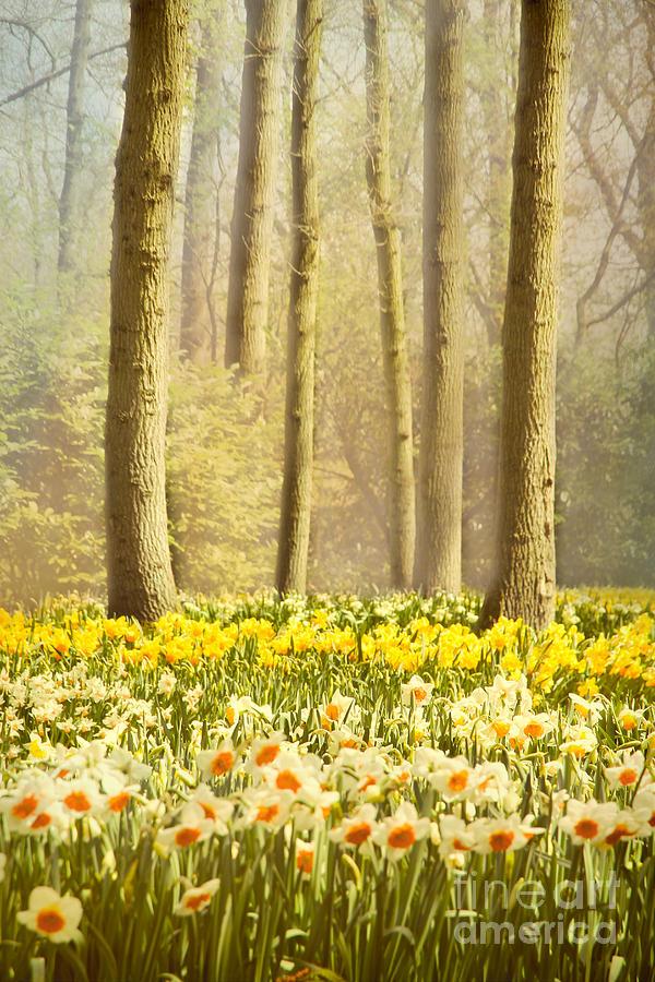 A Spring Day Photograph