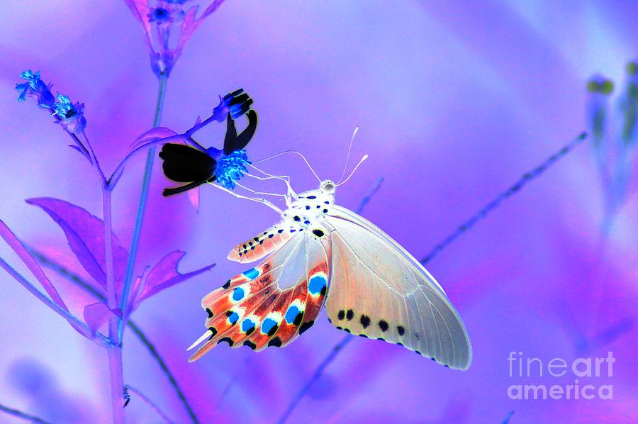 A Strange Butterfly Dream Digital Art
