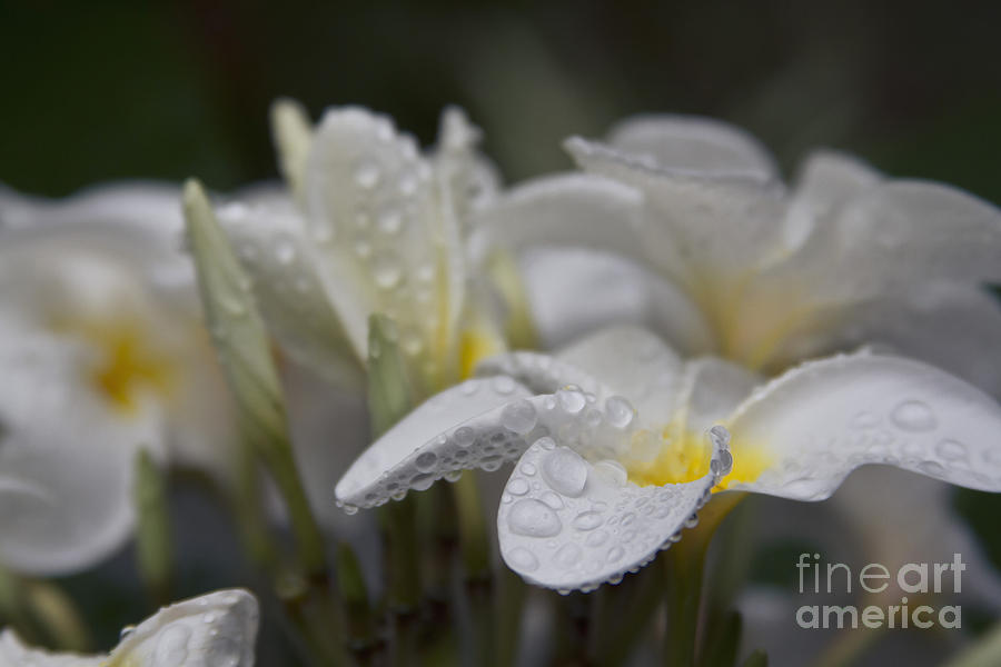 A Subtle Truth Photograph  - A Subtle Truth Fine Art Print