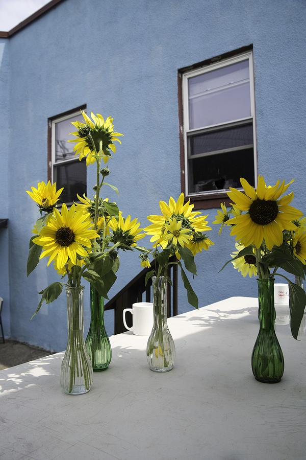 Sunflower Photograph - A Sunny Day by Michael Glenn
