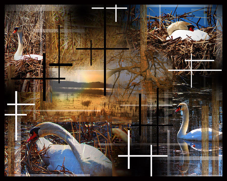 A Swans Mysterious World Photograph  - A Swans Mysterious World Fine Art Print