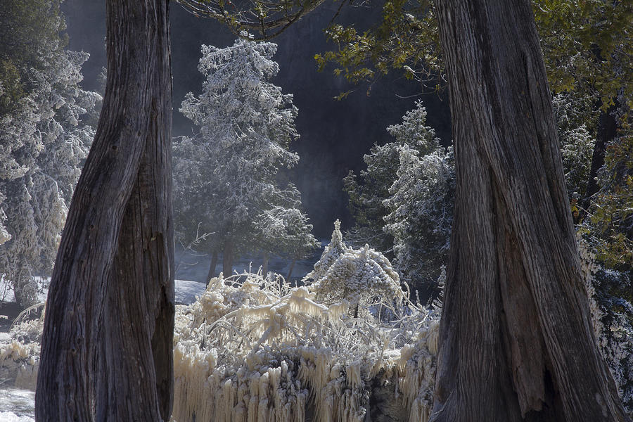 north Woods fairy Tale gooseberry Falls gooseberry River lake Superior minnesota northern Minnesota north Shore river spring Melt spring cedars river Spray ice woods magical magnificent wow nature greeting Cards mary Amerman Photograph - A Twisted Fairy Tale by Mary Amerman