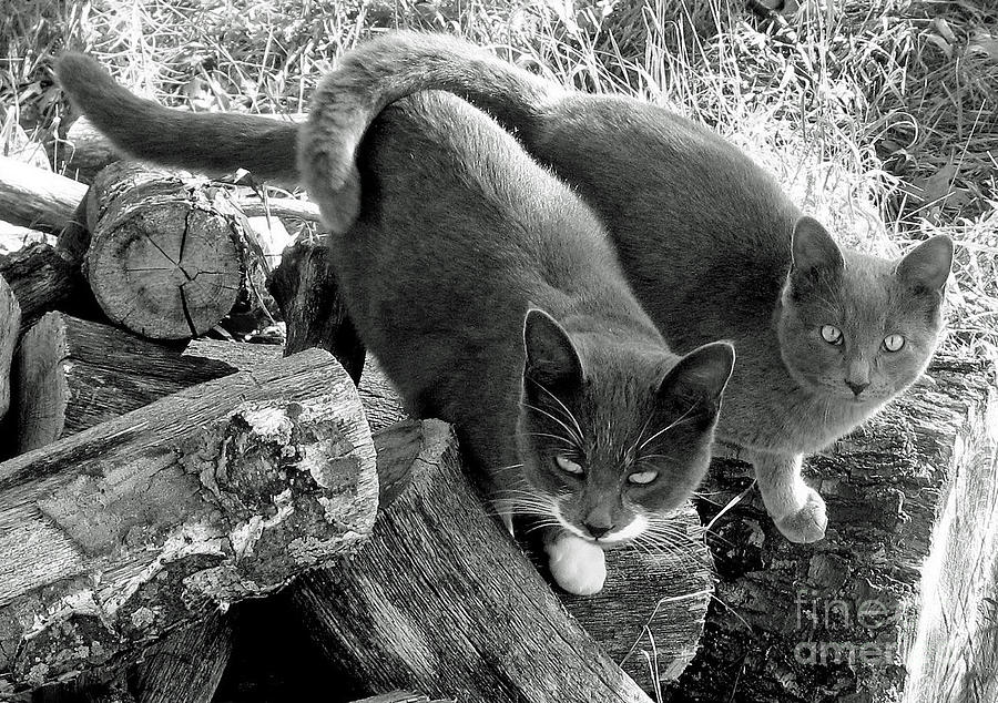 A Tale Of Two Cats Photograph  - A Tale Of Two Cats Fine Art Print