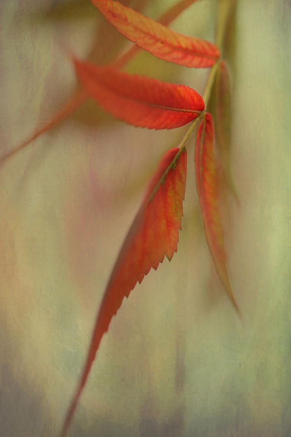 Macro Photograph - A Touch Of Autumn by Annie Snel