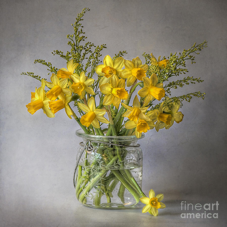A Touch Of Spring Photograph