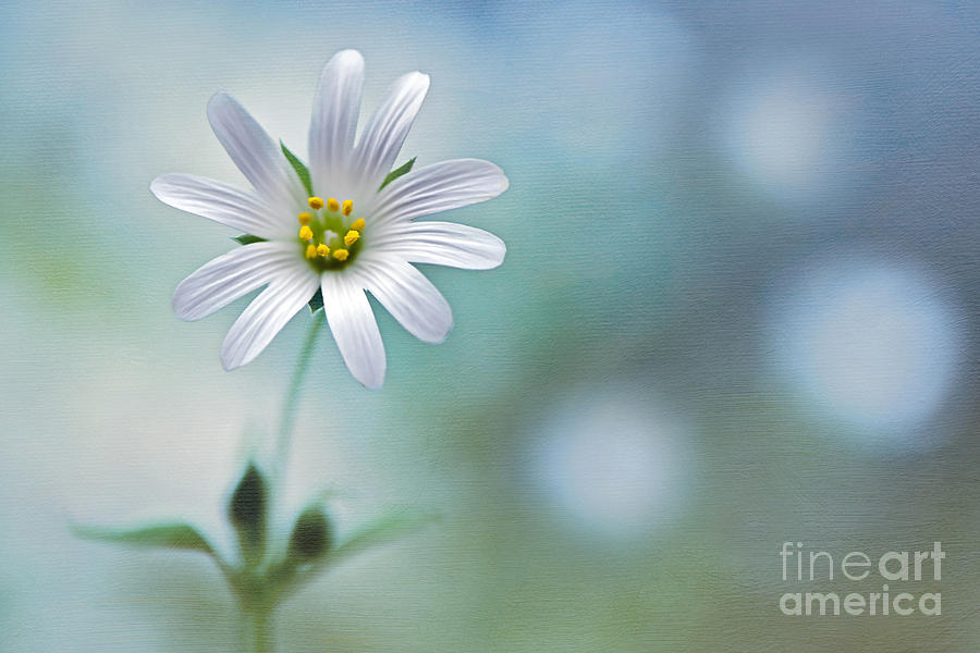 A Touch Of White Photograph  - A Touch Of White Fine Art Print