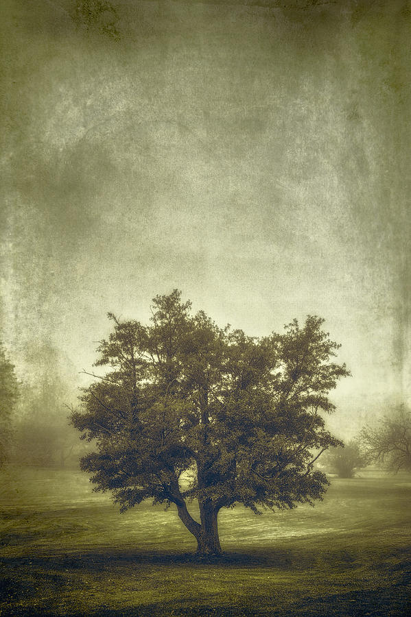 A Tree In The Fog 2 Photograph