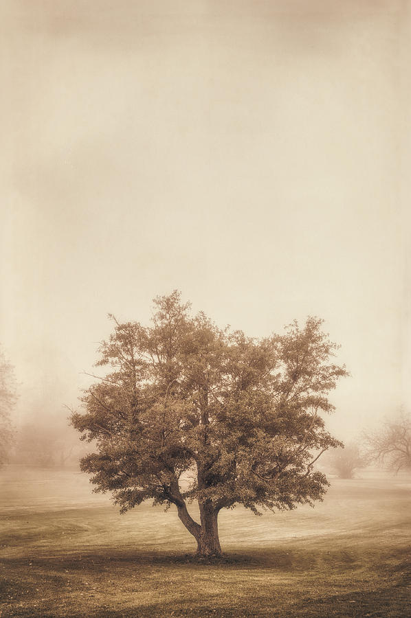 A Tree In The Fog Photograph