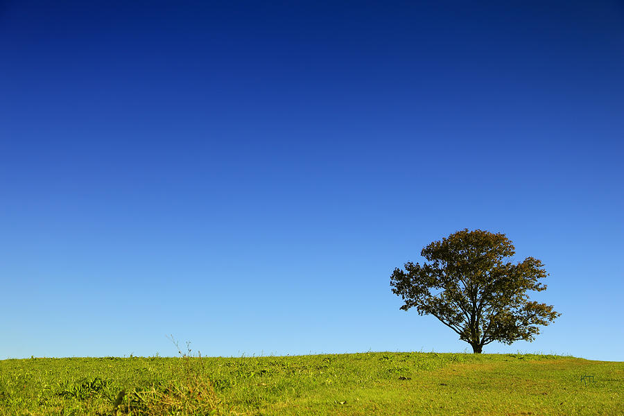 A Tree Stands Alone Photograph