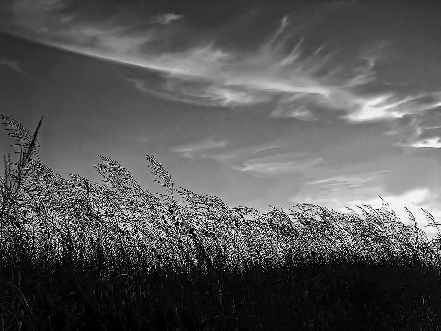 A West Wind Photograph  - A West Wind Fine Art Print