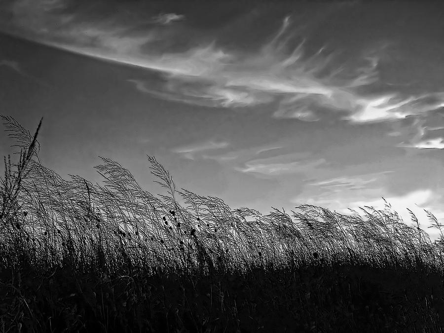 A West Wind Photograph