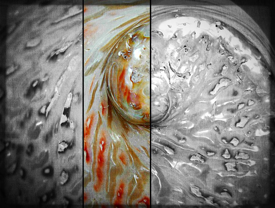 Abalone Photograph