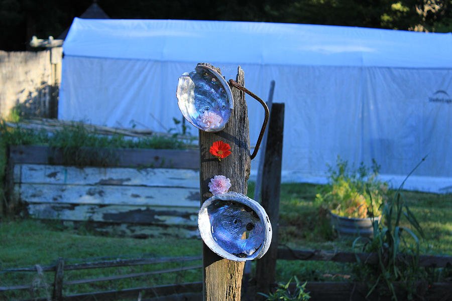 Abalone Shells Garden Flowers And Tent Photograph