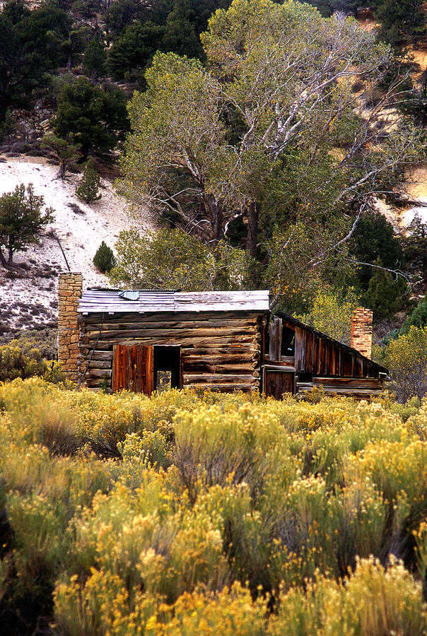 Abandoned Homestead Photograph