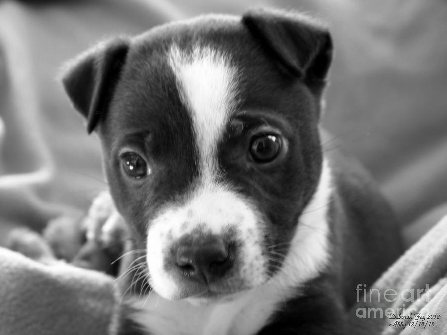 Abby The Rescued Dog Photograph  - Abby The Rescued Dog Fine Art Print