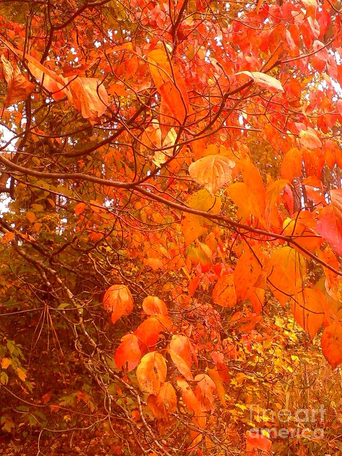 Fall Photograph - Ablaze by Elizabeth Carr