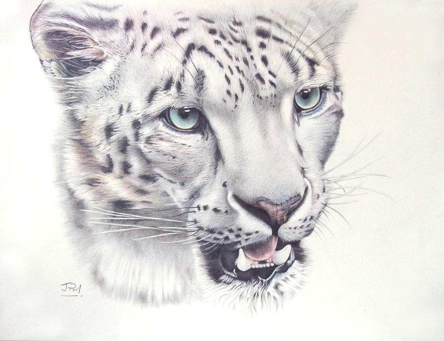 Snow leopard drawing - photo#6