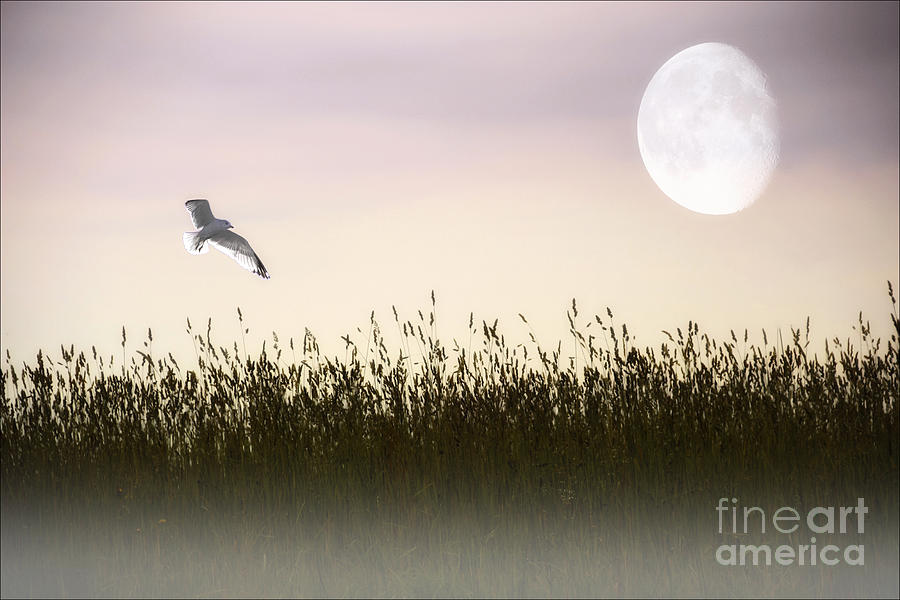 Above The Tall Grass Photograph  - Above The Tall Grass Fine Art Print