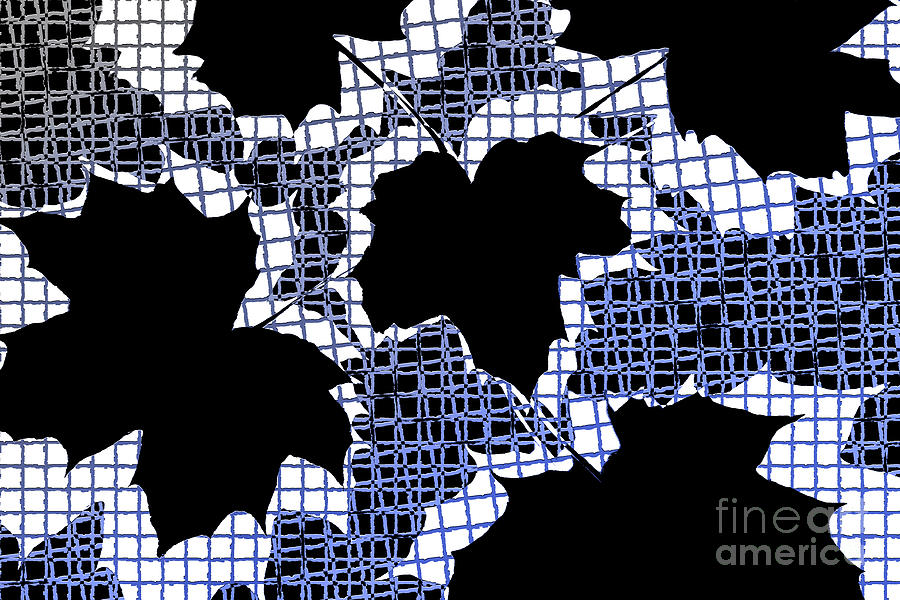 Abstract Leaf Pattern - Black White Blue Photograph
