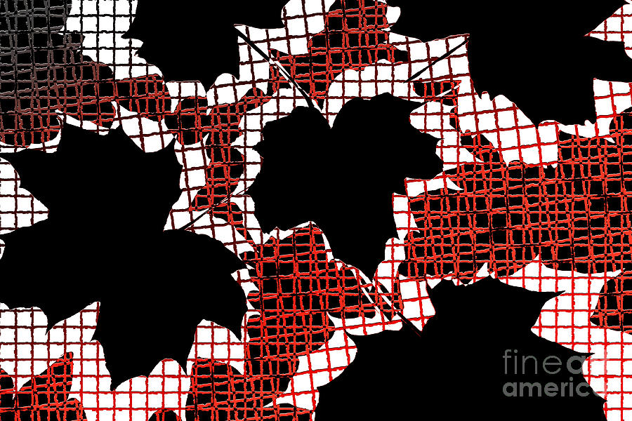 Abstract Leaf Pattern - Black White Red Photograph  - Abstract Leaf Pattern - Black White Red Fine Art Print