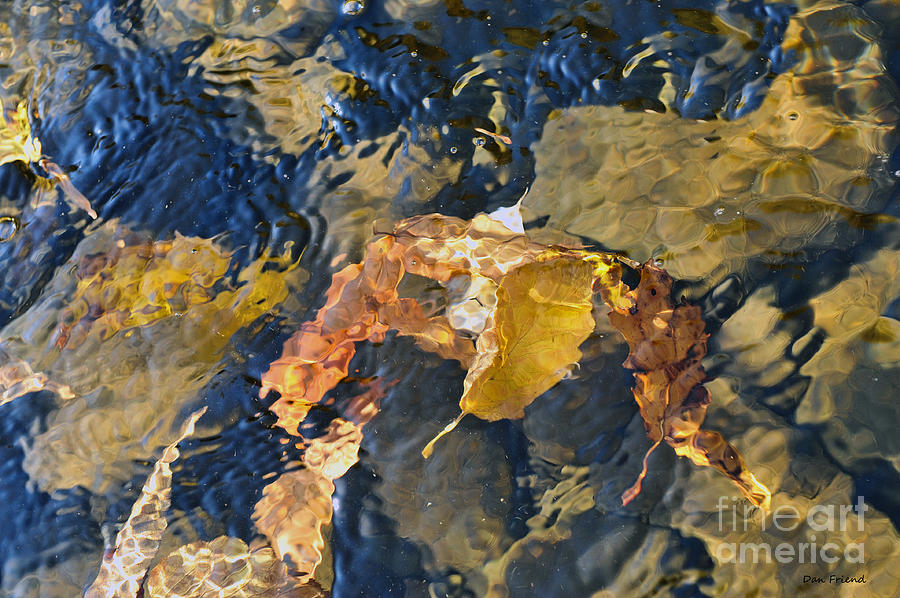 Abstract Leaves In Water Photograph
