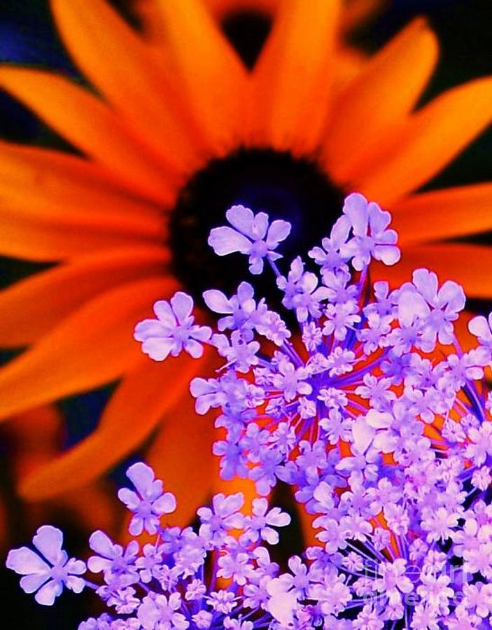 Abstract Orange And Purple Flower is a photograph by Eric Schiabor ...