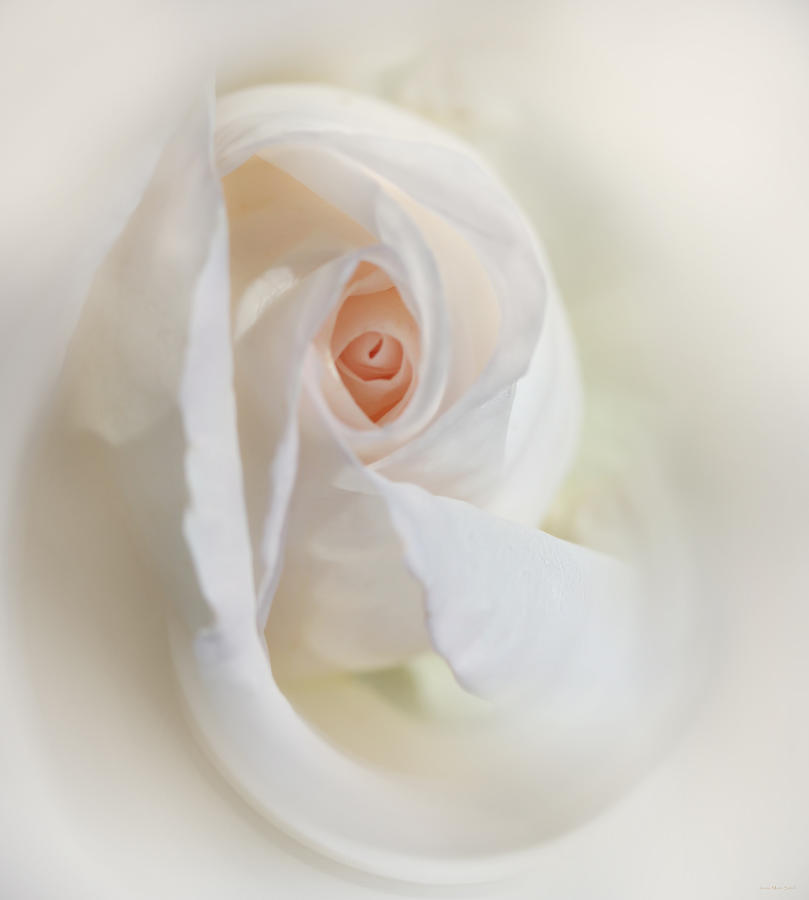 Abstract Pastel Rose Flower Photograph