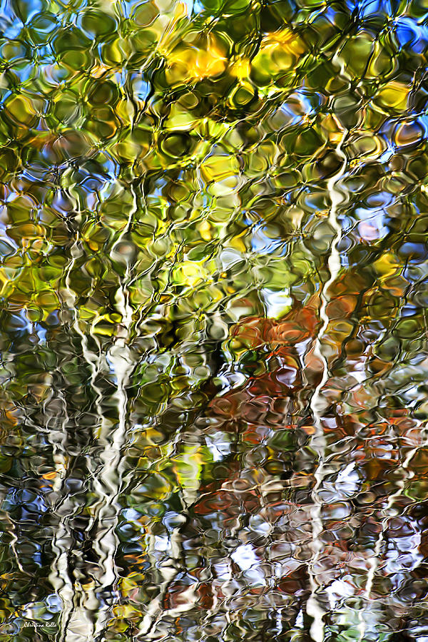 Abstract Water Photograph - Abstract Tree Reflection by Christina Rollo