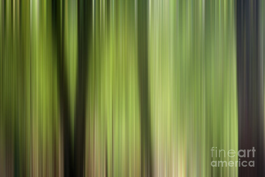 Abstract Trees In The Forest Photograph  - Abstract Trees In The Forest Fine Art Print