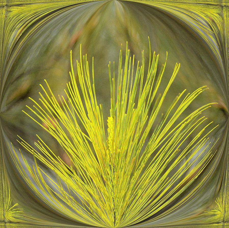 Abstract Yellow Pine Digital Art  - Abstract Yellow Pine Fine Art Print