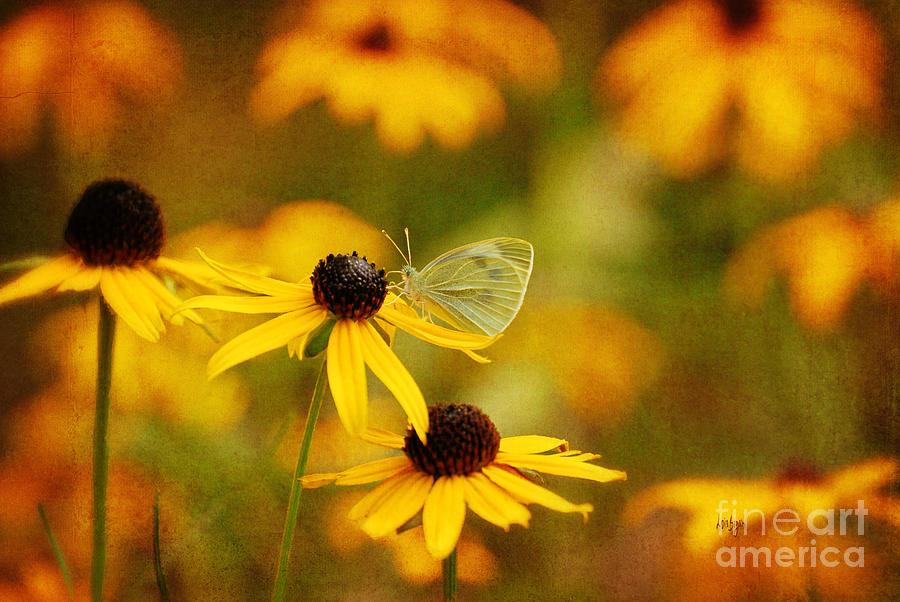 Butterfly Photograph - Abundance by Lois Bryan