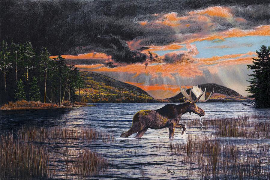 Moose Drawing - Acadia Feast by Brent Ander