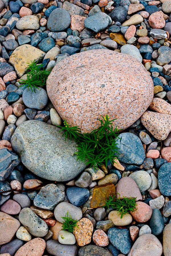 Close Photograph - Acadia Rocks 5506 by Brent L Ander