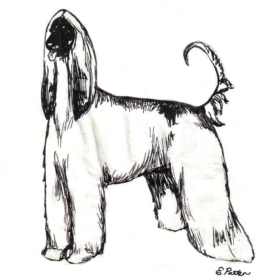 Afghan Hound Drawing - Afghan Hound Fine Art Print