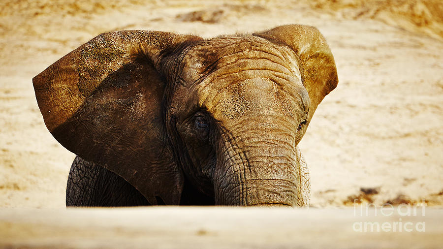 African Elephant Behind A Hill Photograph