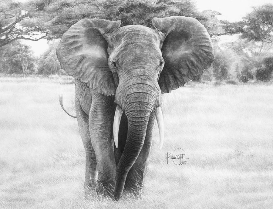 DRAWINGS - South African Wildlife artist and illustrator ...