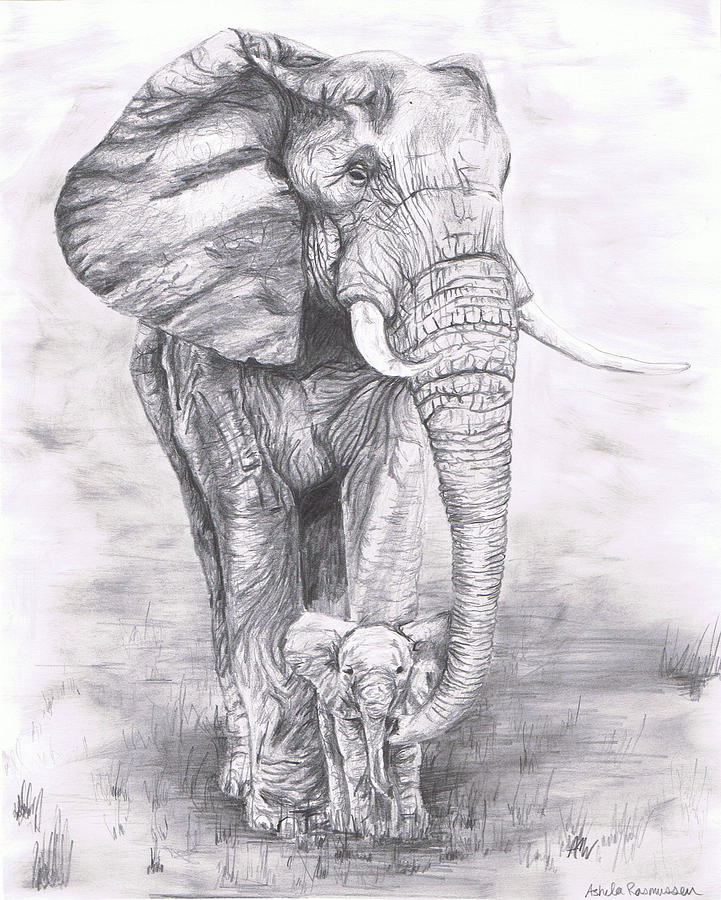 Elephant Drawing African Elephant Drawings