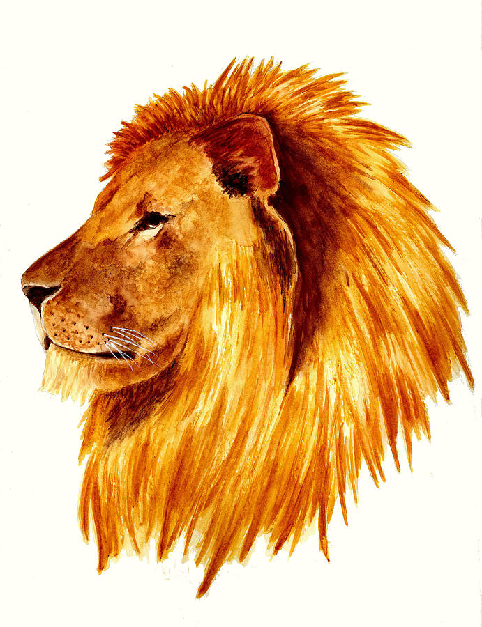 Animals Painting - African Male Lion by Michael Vigliotti