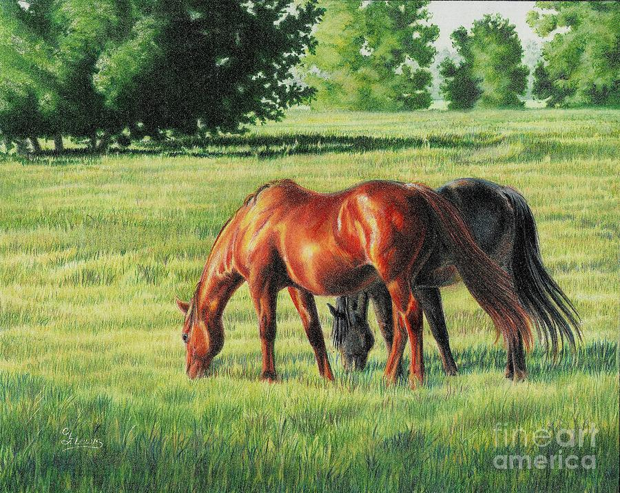 Afternoon Graze Drawing  - Afternoon Graze Fine Art Print