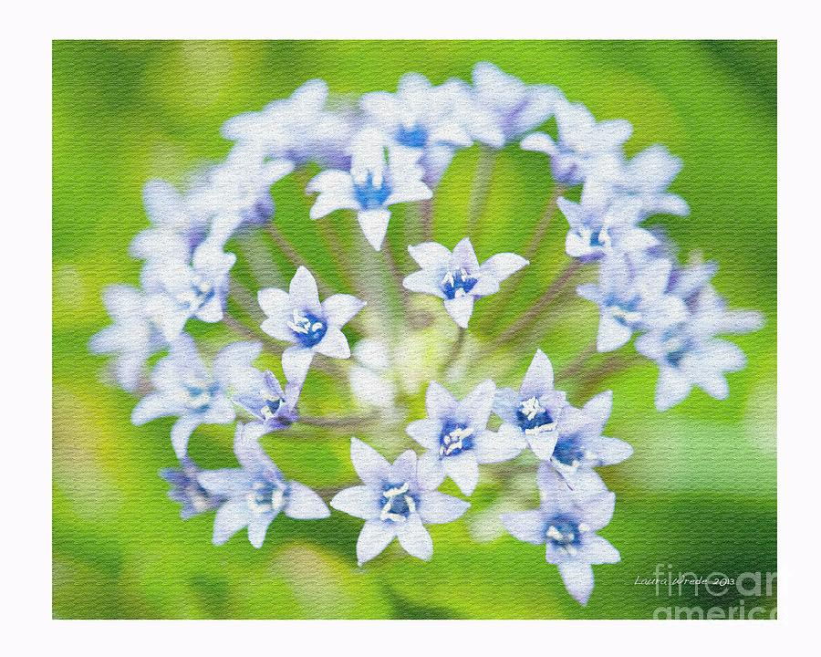 Agapantha Purple Flowers Photograph  - Agapantha Purple Flowers Fine Art Print